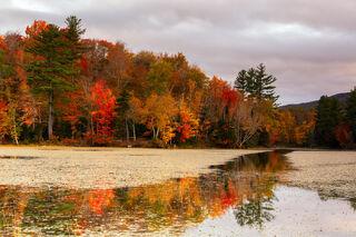 Autumn's Scent