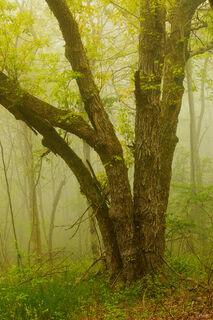 Sea Of Mist