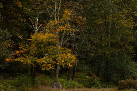 Forest fall scene at Harriman State Park in New York.