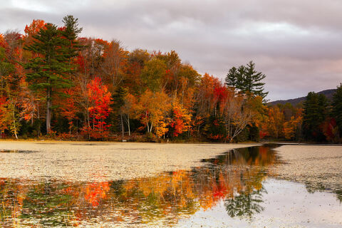 View of colorful trees at Leffert's Pond in Chittenden in Vermont.