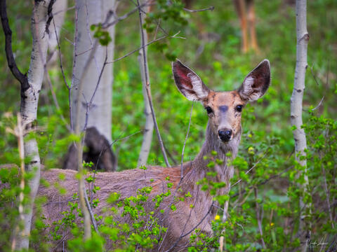 View of deer captured near the Million Dollar Highway.