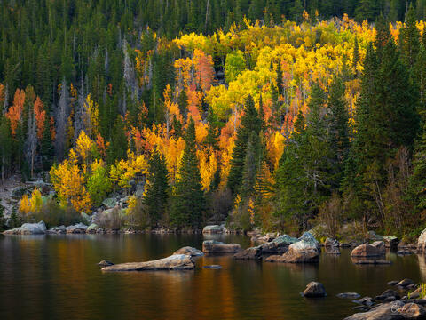 View of Aspen trees at Bear Lake in Rocky Mountain National Park in Colorado.