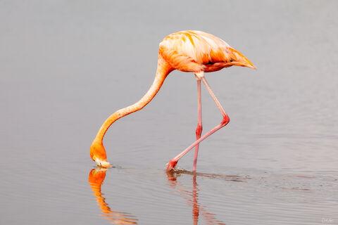 View of Flamingo in Celestun in Mexico.