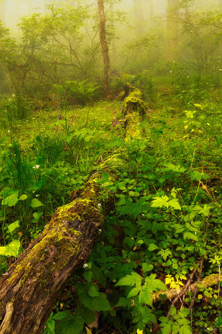 Forest scenery in Shenandoah National Park in Virginia.