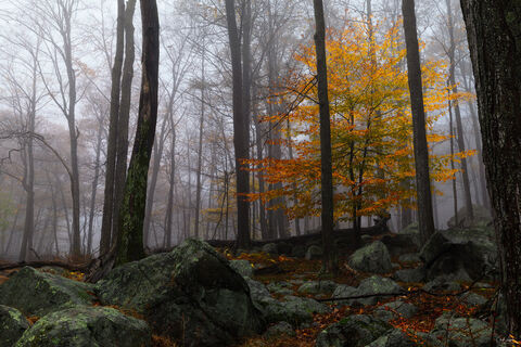 Woodland | Nature Photography Fine Art Prints