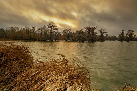 View of Cypress trees at Lake Martin in Louisiana.