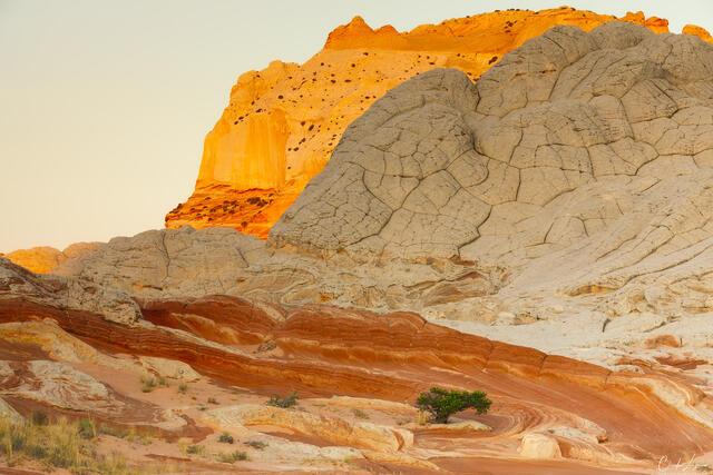 Desert Tree print