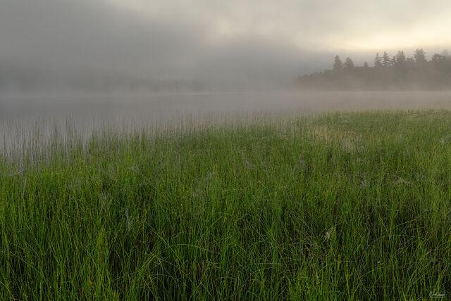 Morning Mist print
