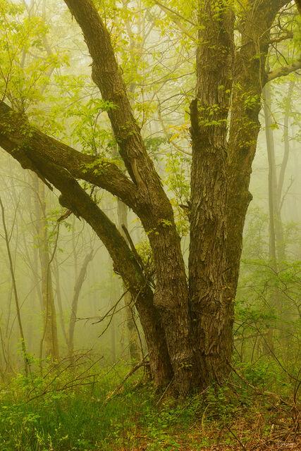 Sea Of Mist print