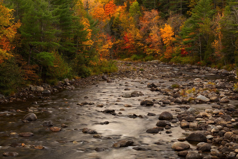 Fall foliage along Ausable River upstate New York.