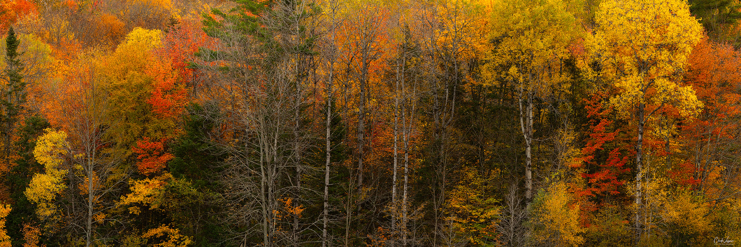 View of colorful trees near Leffert's Pond in Chittenden in Vermont.
